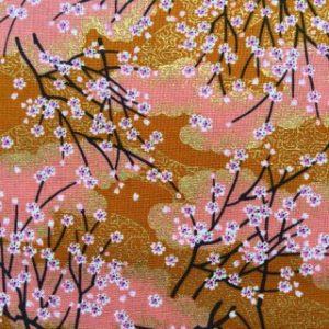 WI-Cherry_blossom-Apricot